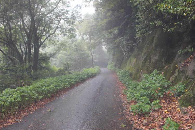 犬鳴峠旧道