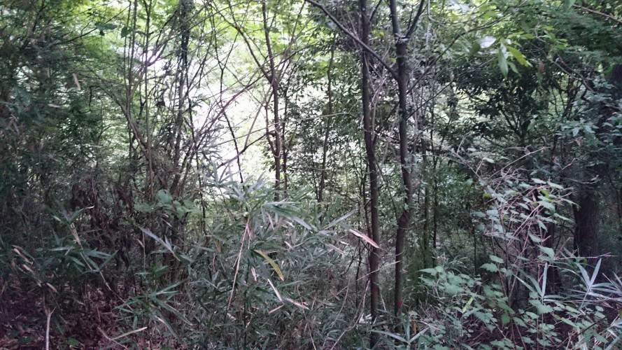 城下トンネル上部の雑木林